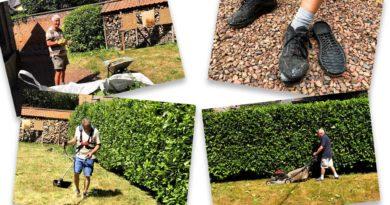 Remise en ordre du jardin